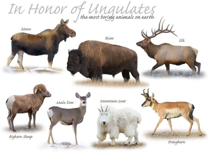 In honor of ungulates, by Hal Brindley