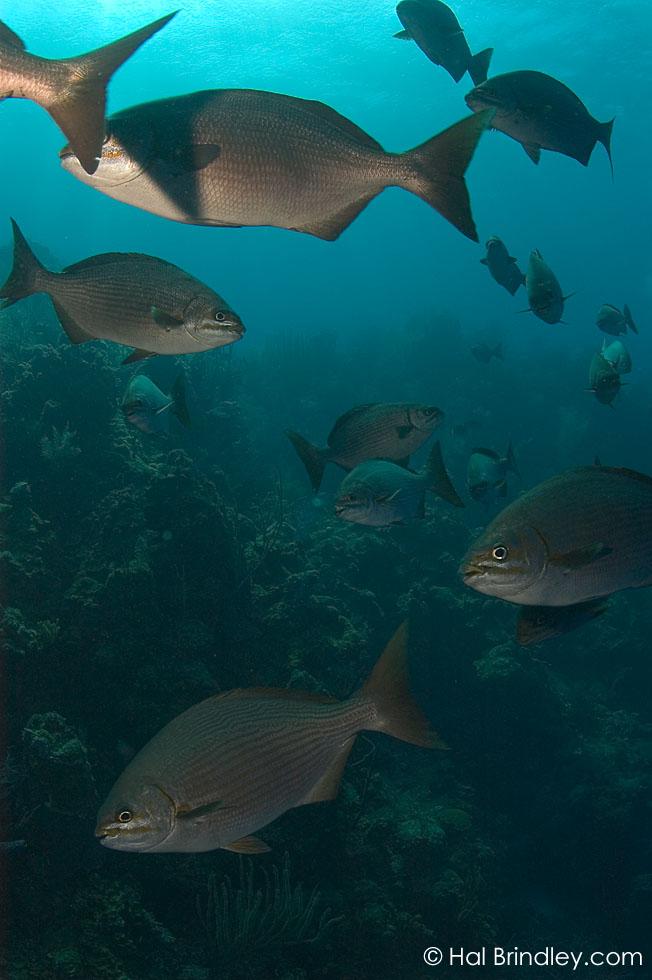 """The Aquarium"" off Long Caye at Lighthouse Reef, Belize © Hal Brindley"