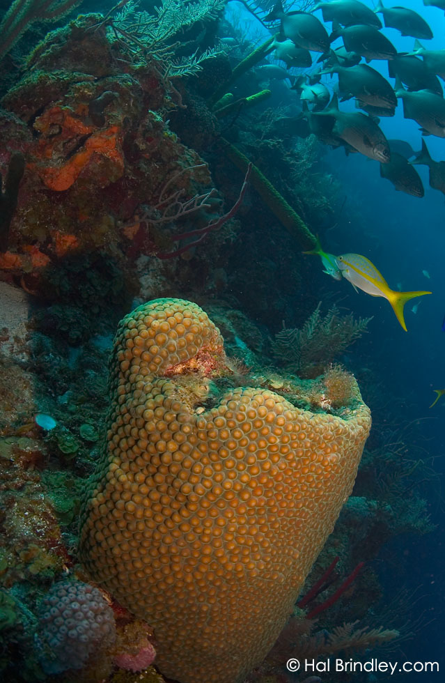 """The Aquarium"" off Long Caye at Lighthouse Reef, Belize © Hal Brindley"