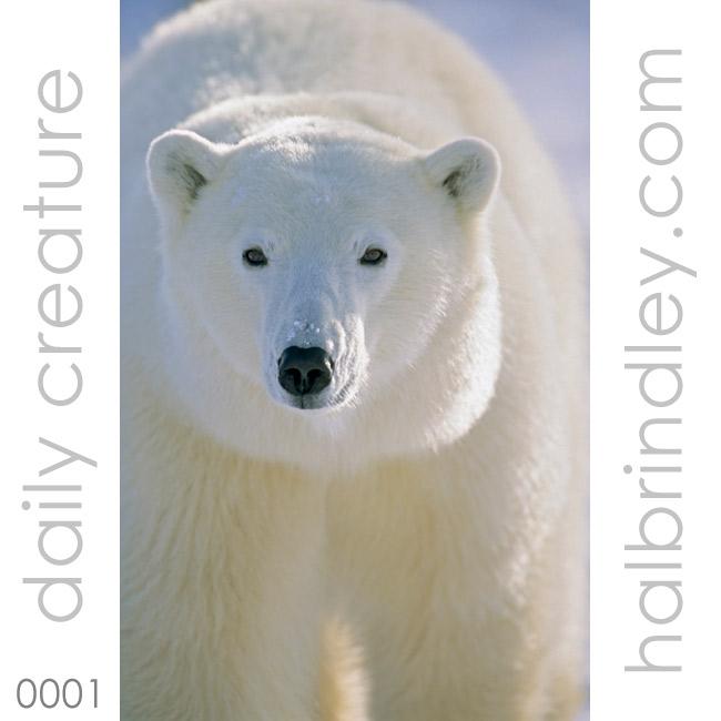 0001-polarbear