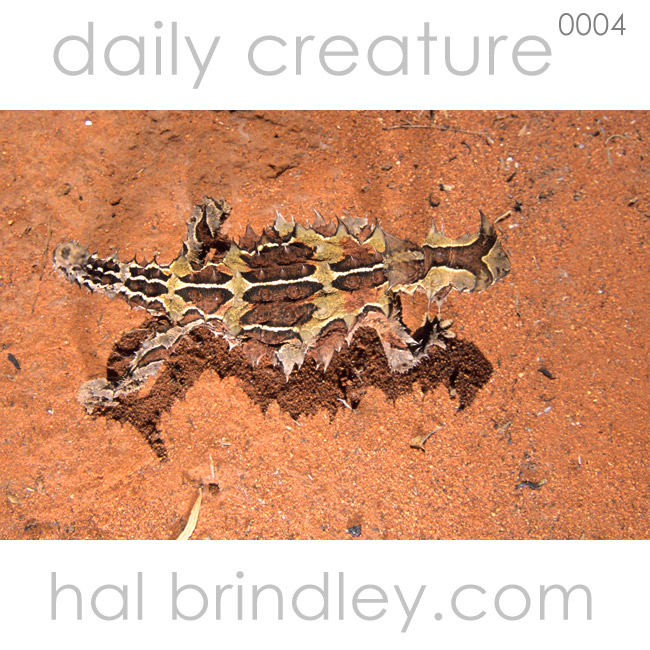 0004-thornydevil