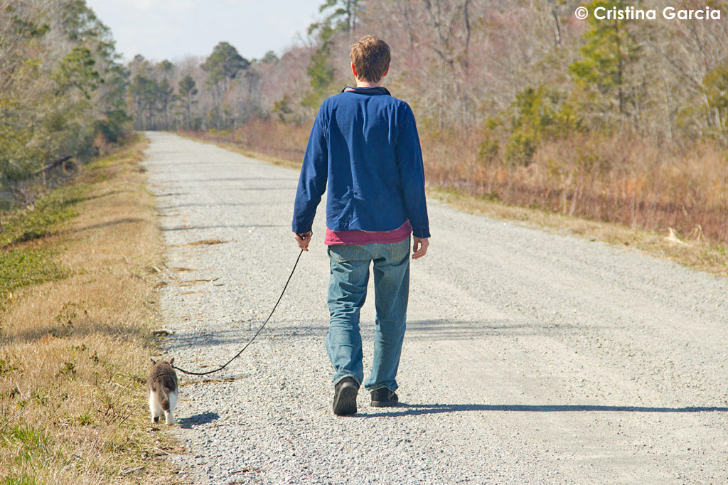 Hal Brindley walking his cat Scamper on a leash in the Alligator River National Wildlife Refuge, NC