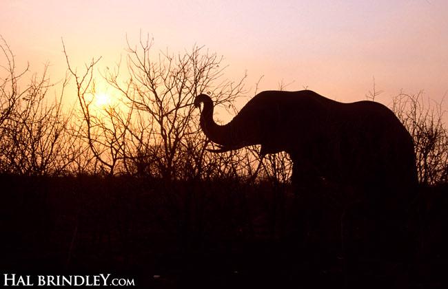 elephant-sillhouette