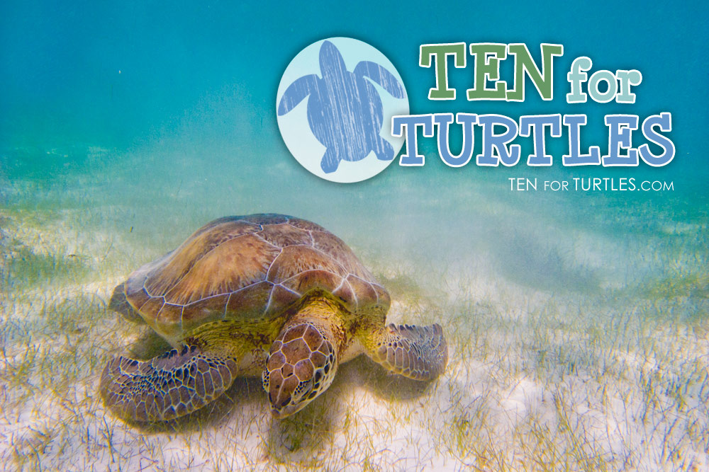 ten-for-turtles